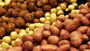 Качественный картофель